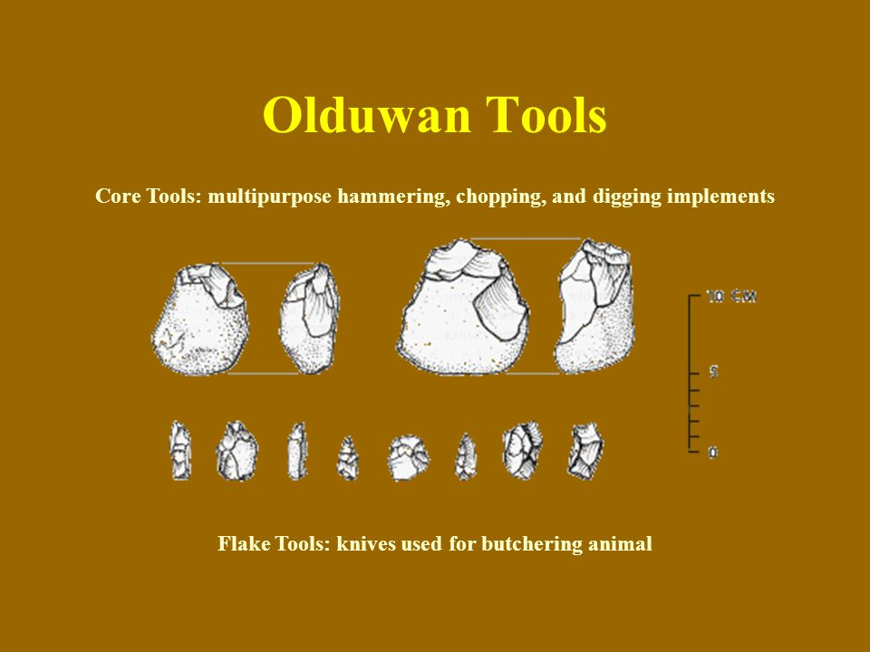 Olduwan Tools Core Tools: multipurpose hammering, chopping, and digging implements.
