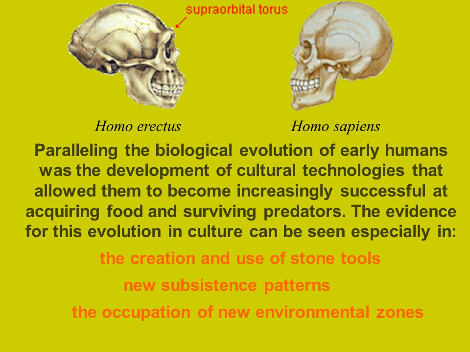 the creation and use of stone tools new subsistence patterns