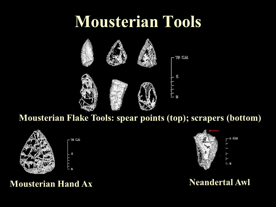 Mousterian Tools Mousterian Flake Tools: spear points (top); scrapers (bottom)