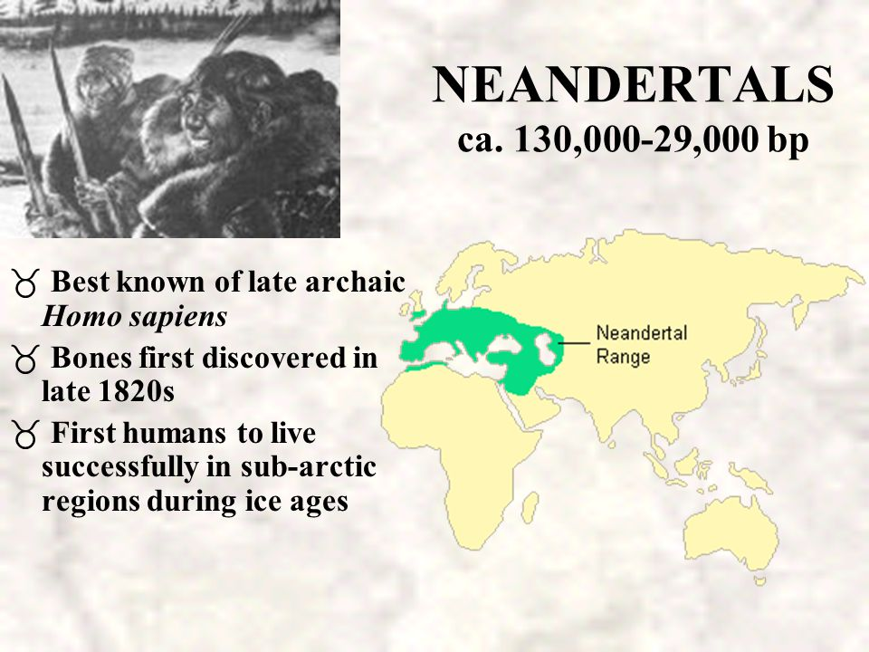 NEANDERTALS ca. 130,000-29,000 bp Best known of late archaic Homo sapiens. Bones first discovered in late 1820s.