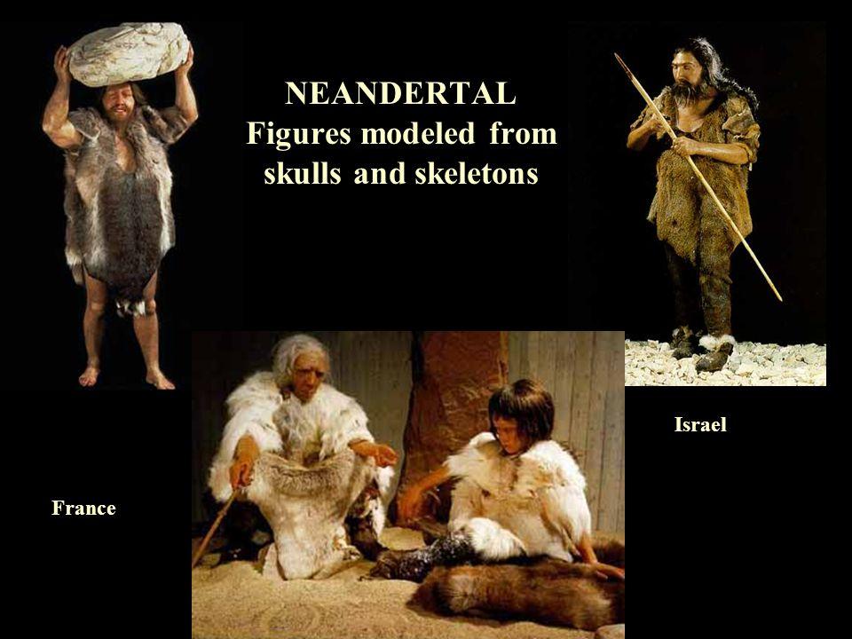 NEANDERTAL Figures modeled from skulls and skeletons