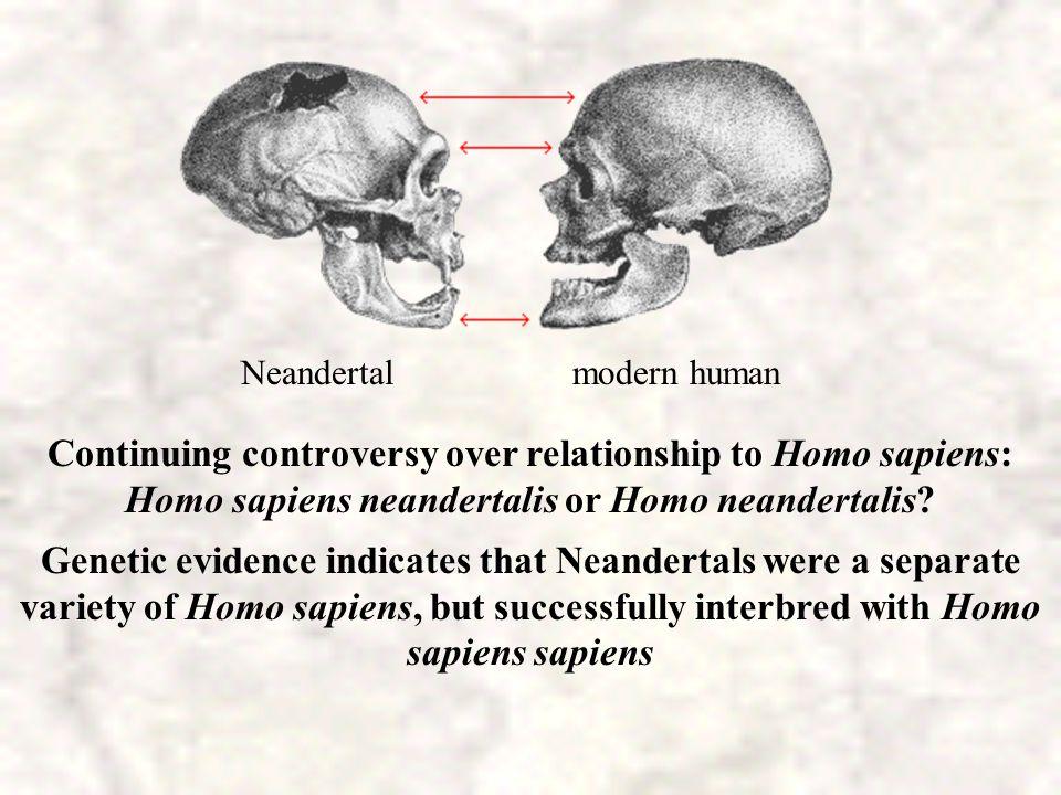 Neandertal modern human