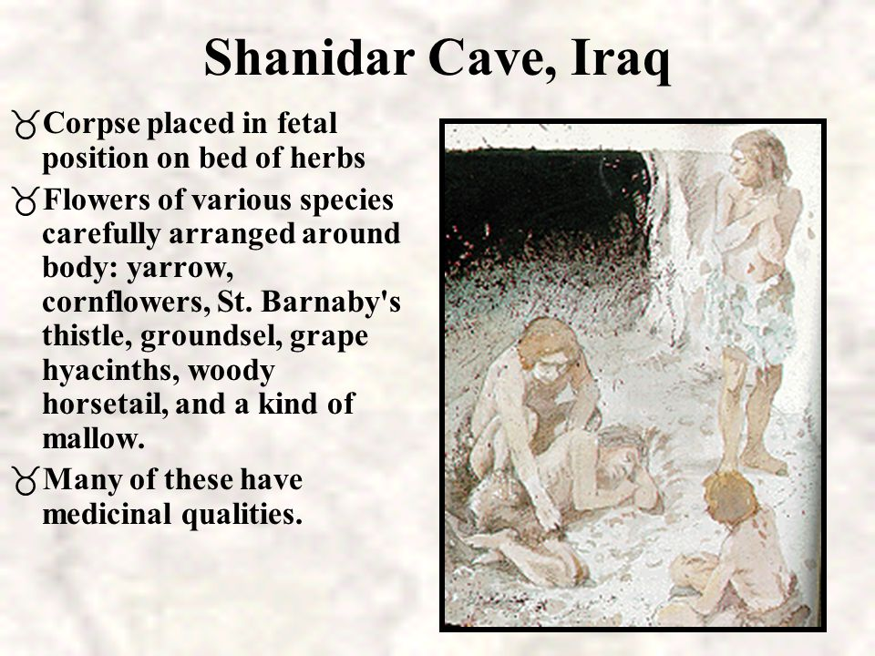 Shanidar Cave, Iraq Corpse placed in fetal position on bed of herbs