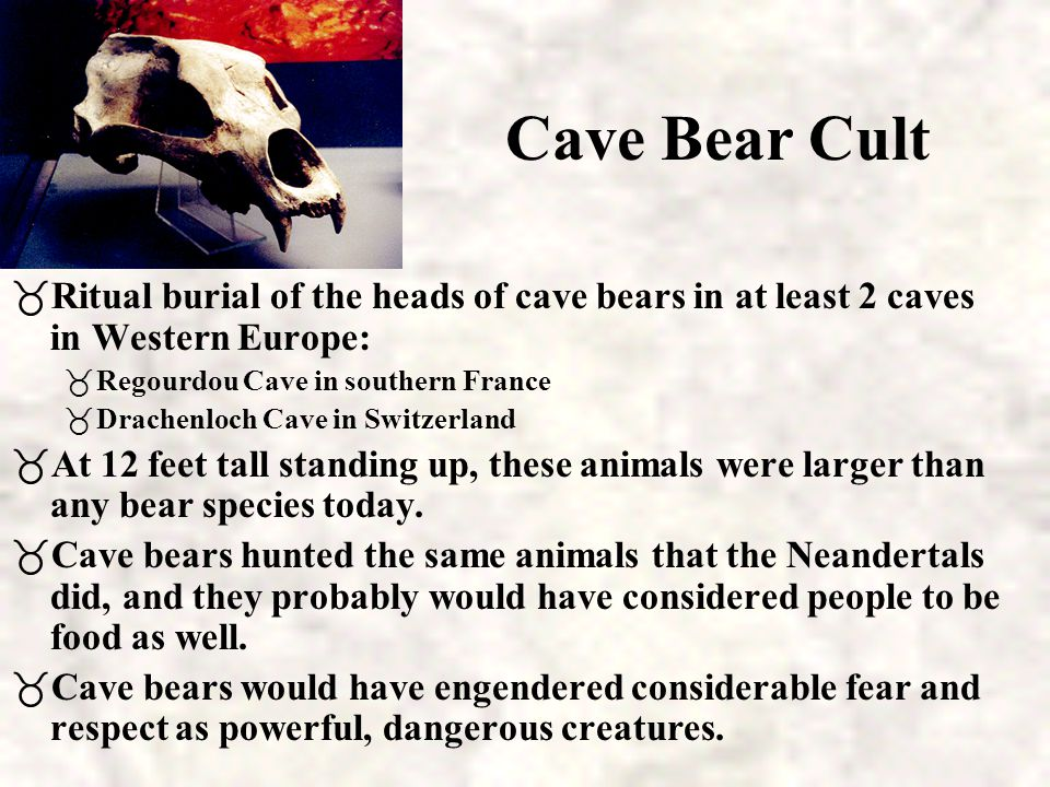 Cave Bear Cult Ritual burial of the heads of cave bears in at least 2 caves in Western Europe: Regourdou Cave in southern France.