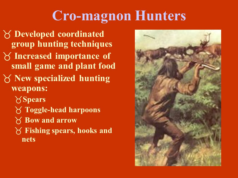 Cro-magnon Hunters Developed coordinated group hunting techniques