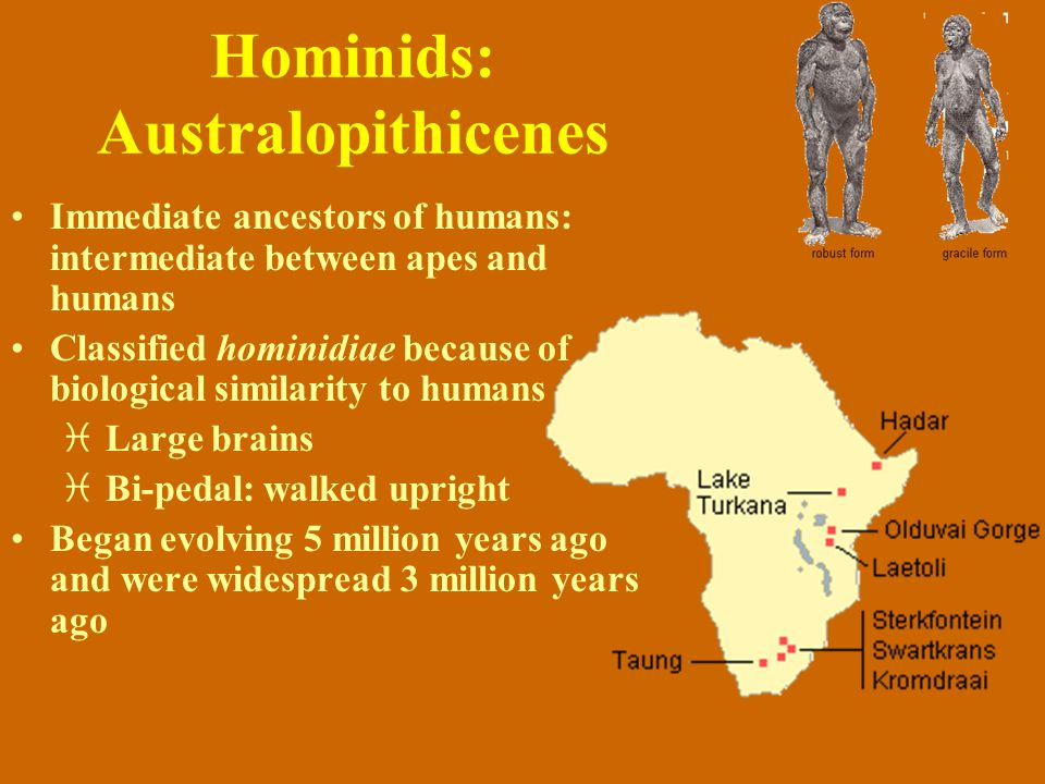 Hominids: Australopithicenes