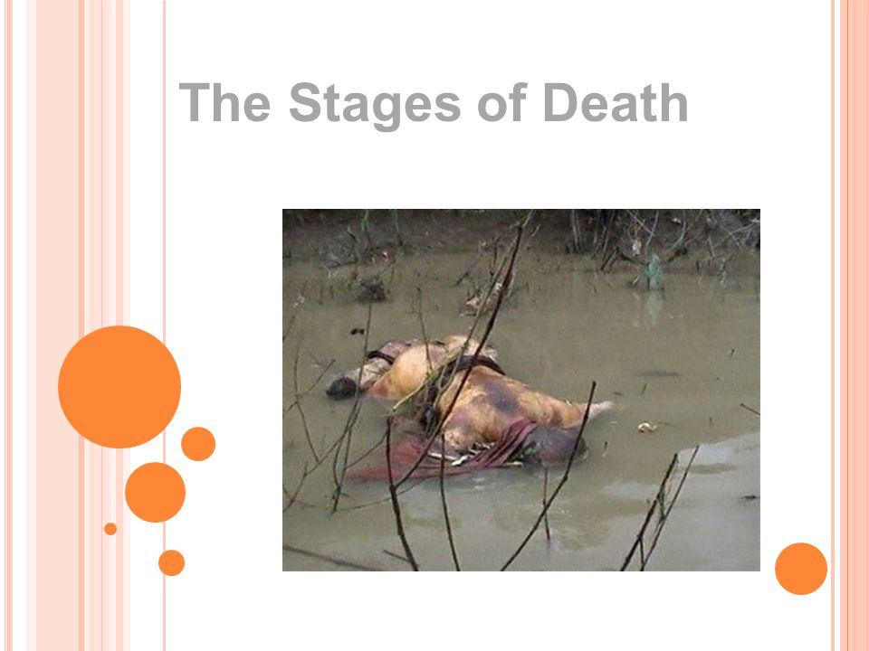 The Stages of Death