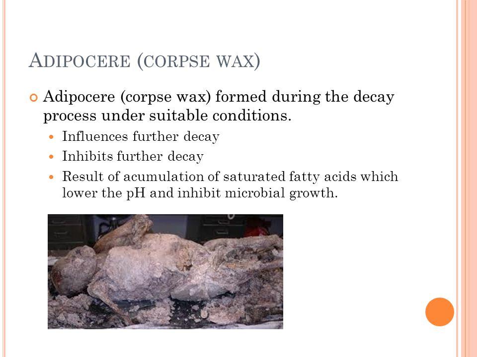 Adipocere (corpse wax)