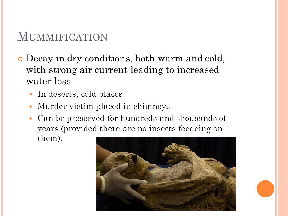 Mummification Decay in dry conditions, both warm and cold, with strong air current leading to increased water loss.