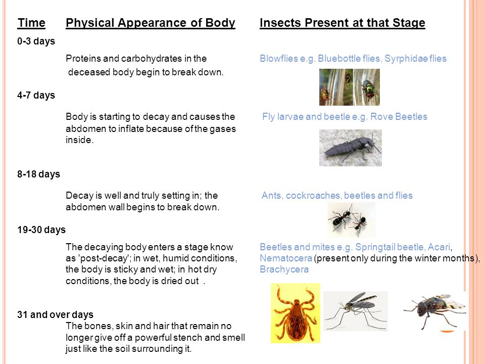 Time Physical Appearance of Body Insects Present at that Stage