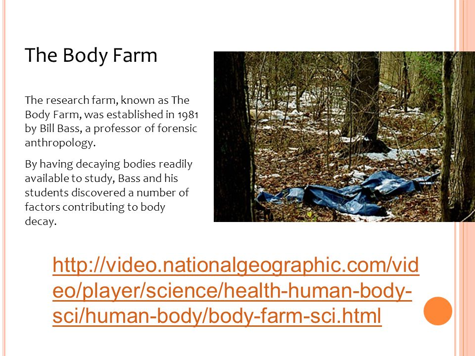 The Body Farm The research farm, known as The Body Farm, was established in 1981 by Bill Bass, a professor of forensic anthropology.