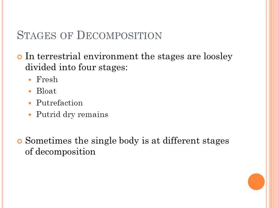 The Stages of the Human Decomposition Process
