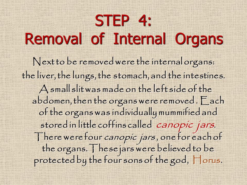 STEP 4: Removal of Internal Organs