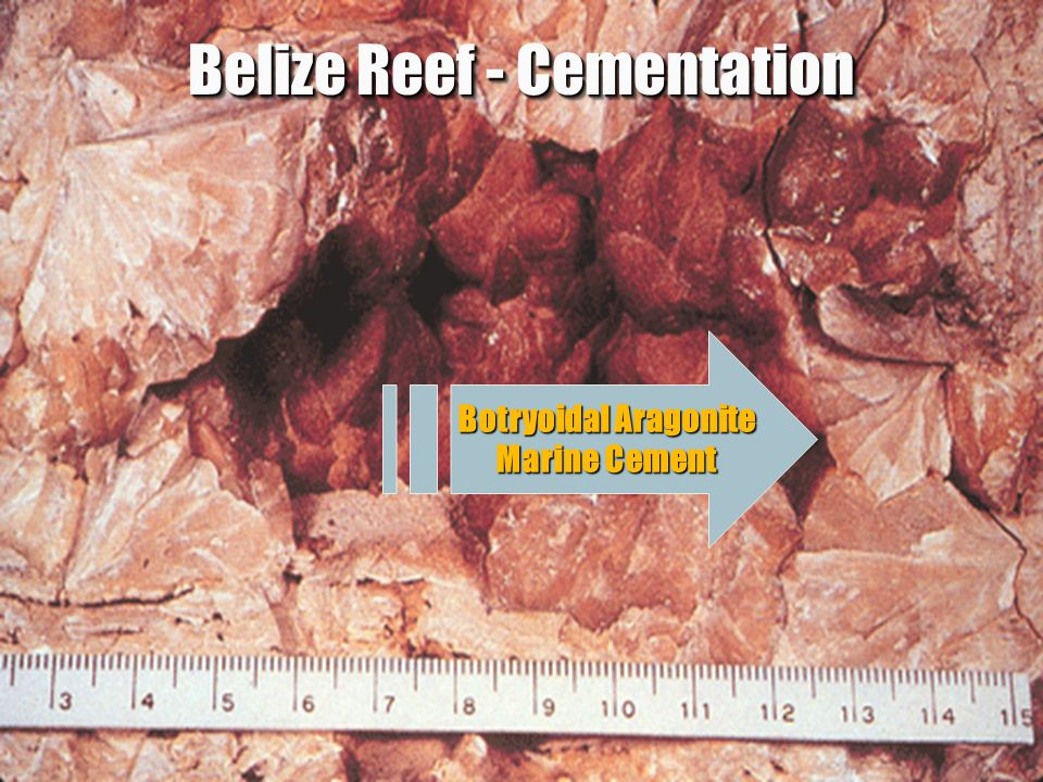 Belize Reef - Cementation