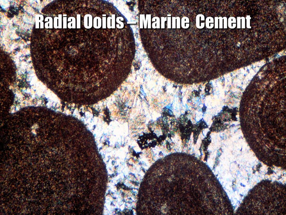Radial Ooids – Marine Cement