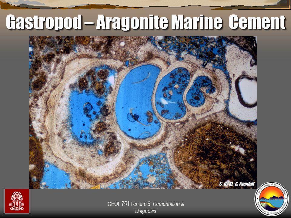 Gastropod – Aragonite Marine Cement