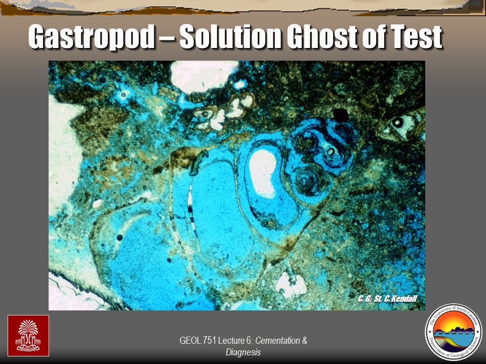 Gastropod – Solution Ghost of Test