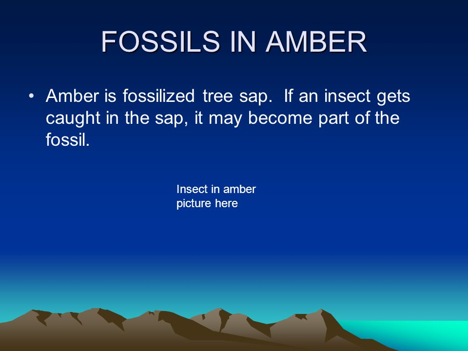 FOSSILS IN AMBER Amber is fossilized tree sap. If an insect gets caught in the sap, it may become part of the fossil.