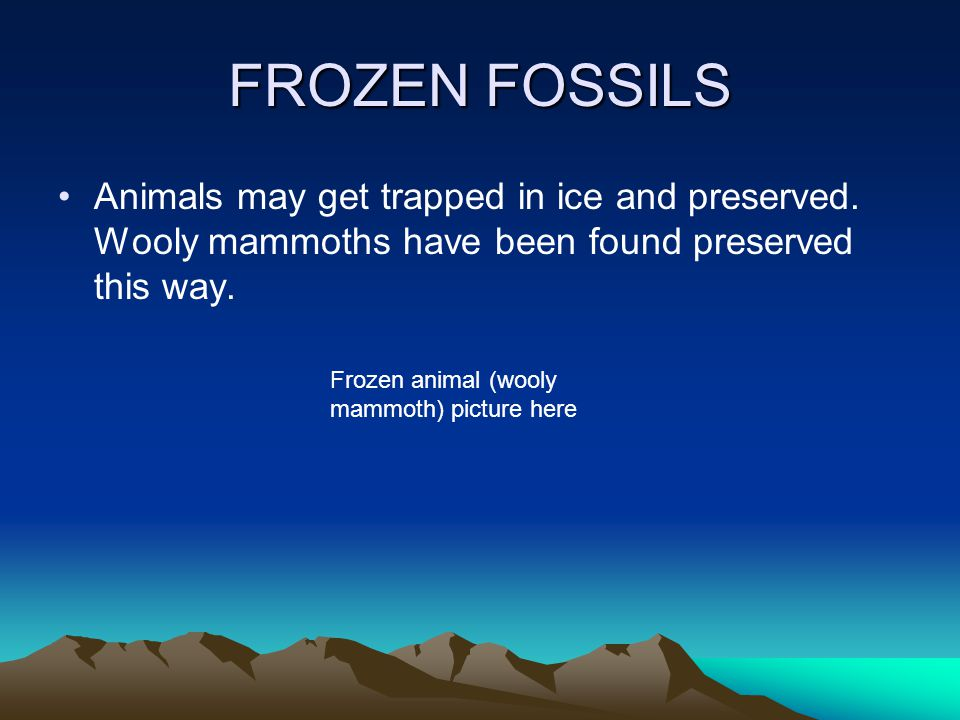 FROZEN FOSSILS Animals may get trapped in ice and preserved. Wooly mammoths have been found preserved this way.