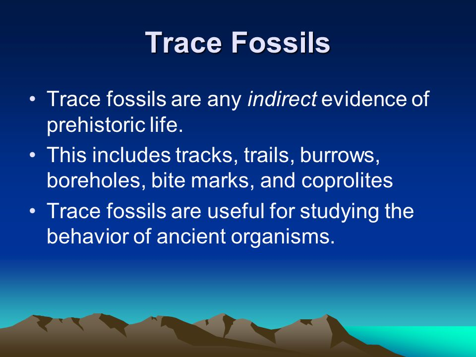 Trace Fossils Trace fossils are any indirect evidence of prehistoric life.
