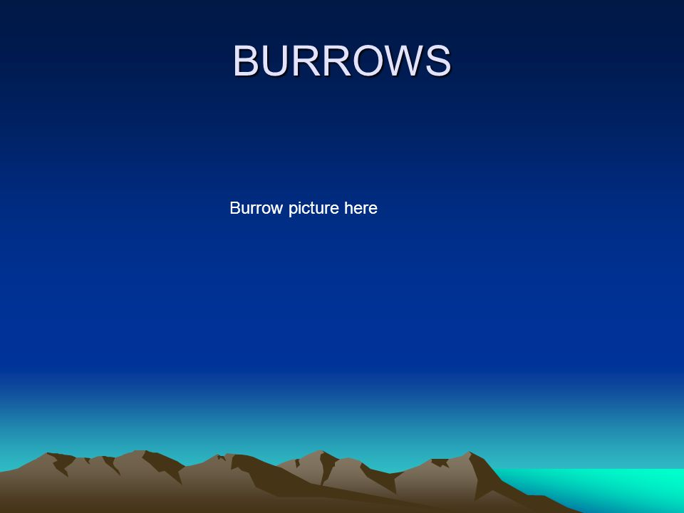 BURROWS Burrow picture here