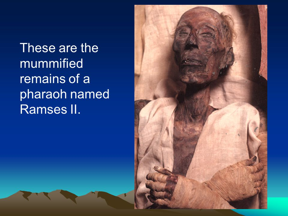 These are the mummified remains of a pharaoh named Ramses II.