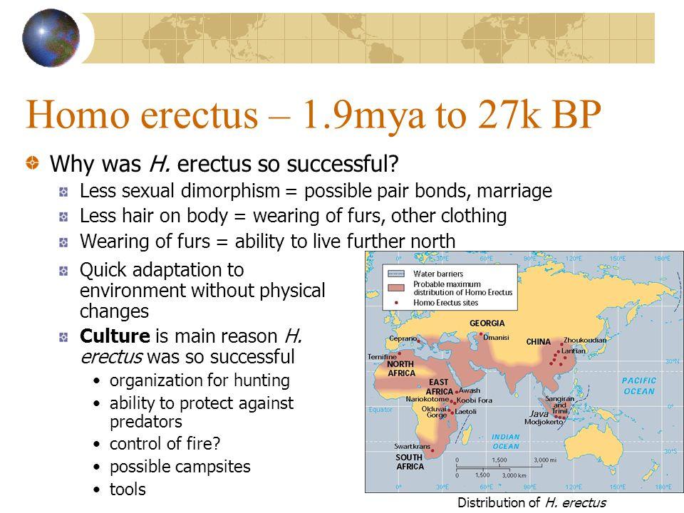Homo erectus – 1.9mya to 27k BP