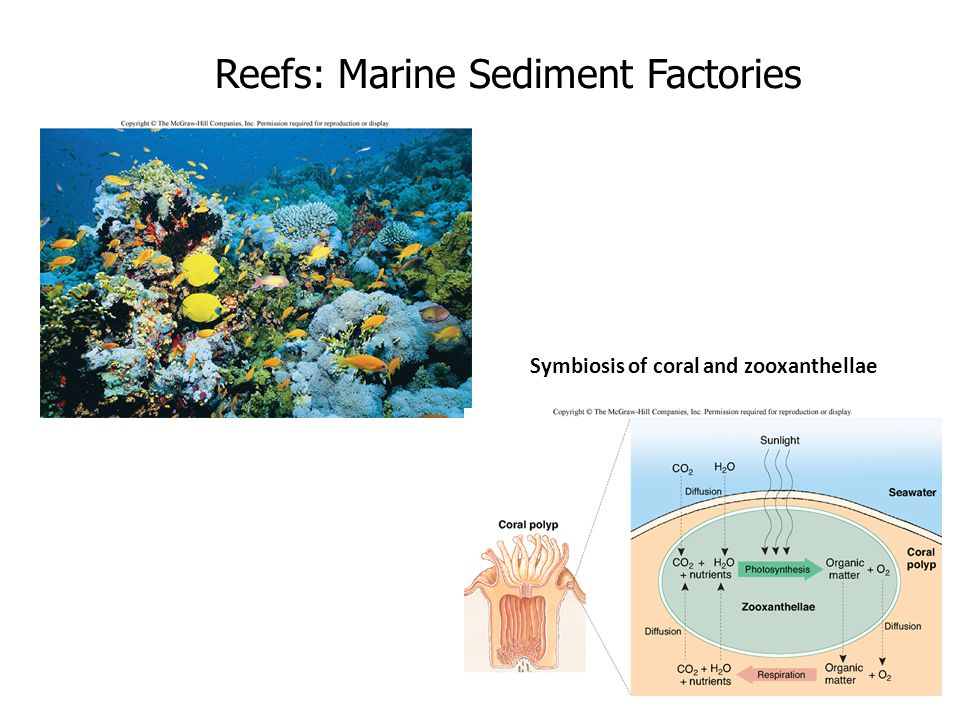 Reefs: Marine Sediment Factories