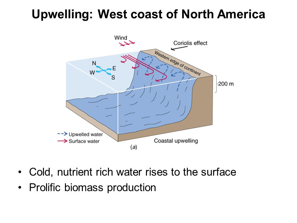 Upwelling: West coast of North America