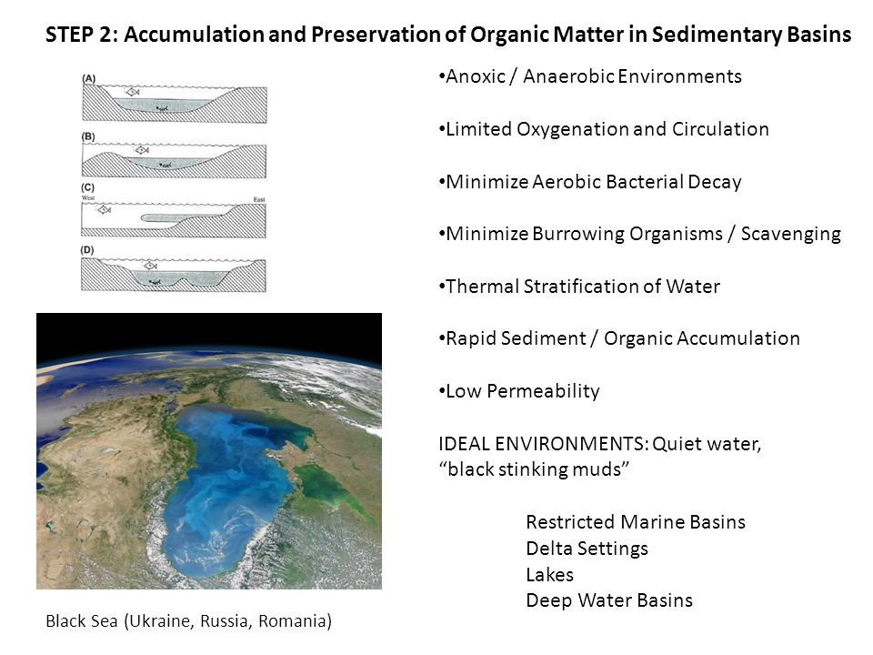 STEP 2: Accumulation and Preservation of Organic Matter in Sedimentary Basins