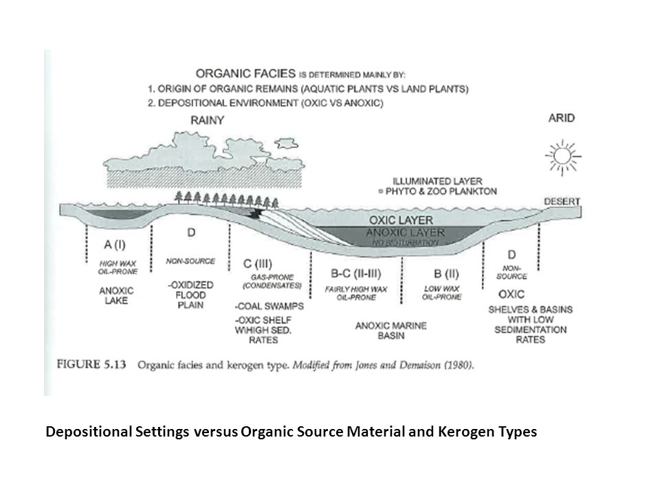 Depositional Settings versus Organic Source Material and Kerogen Types