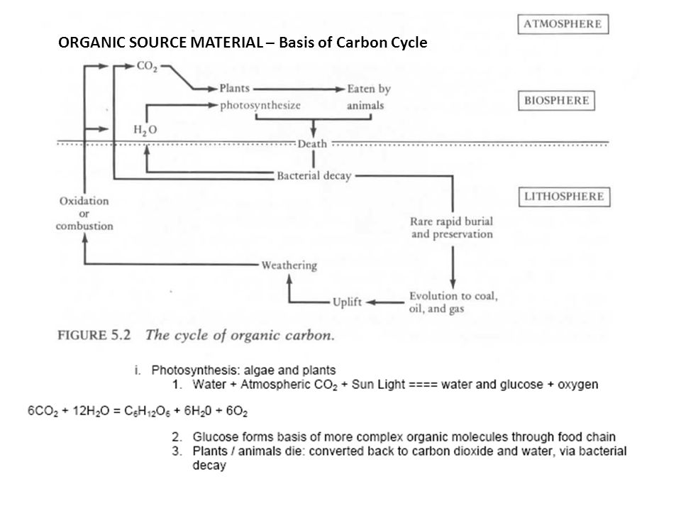 ORGANIC SOURCE MATERIAL – Basis of Carbon Cycle
