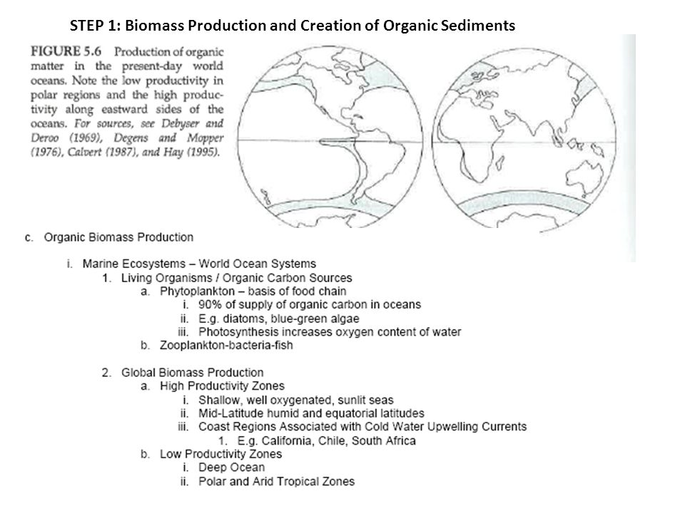 STEP 1: Biomass Production and Creation of Organic Sediments