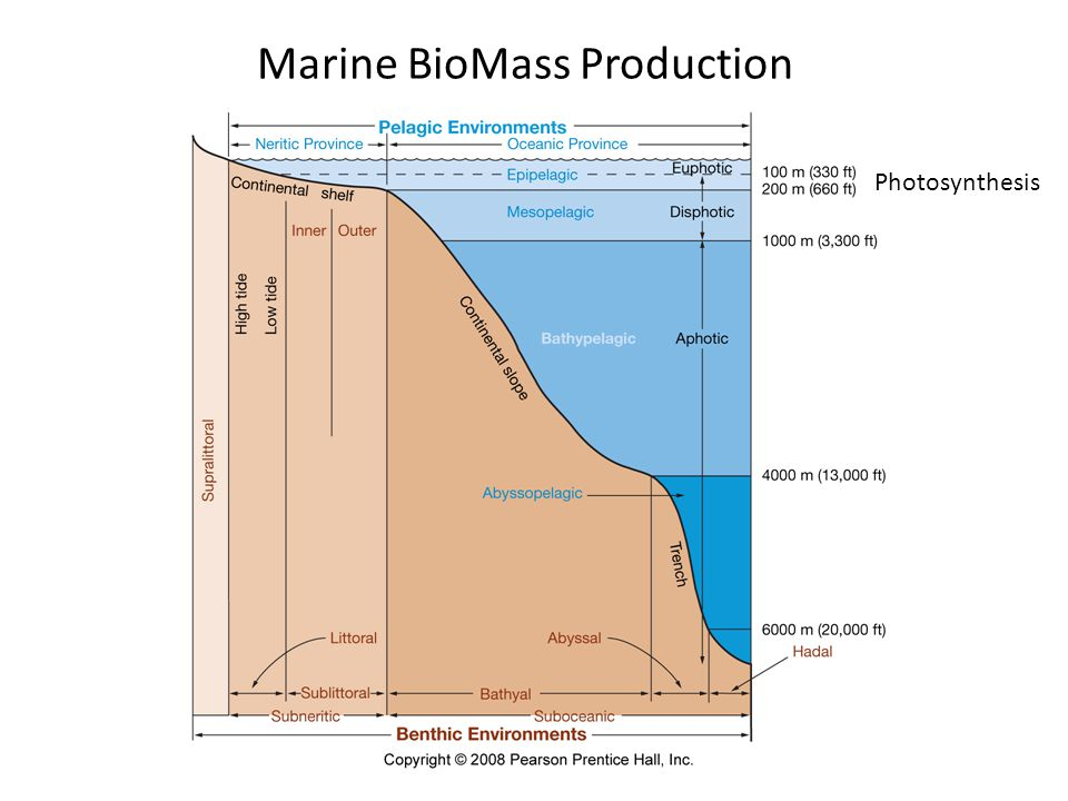 Marine BioMass Production