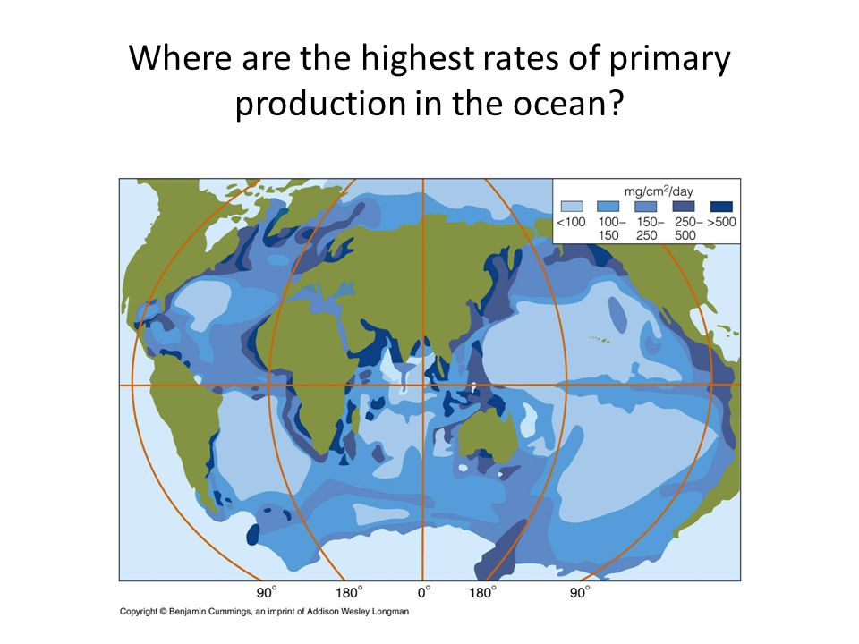 Where are the highest rates of primary production in the ocean