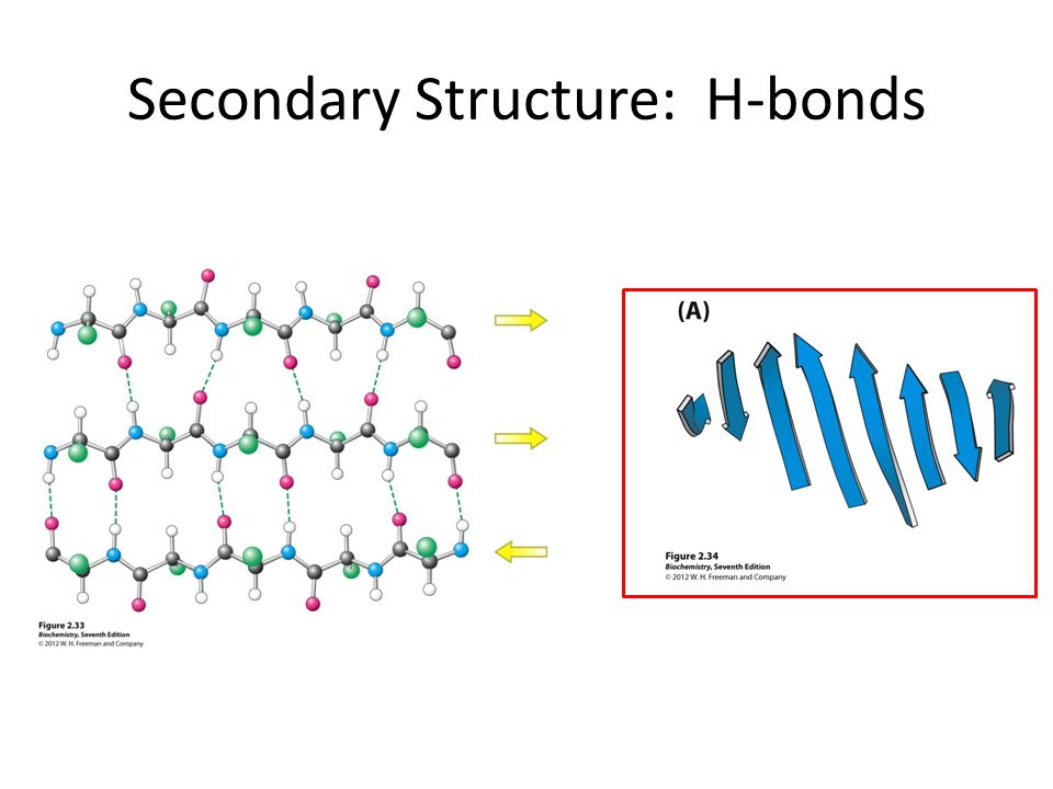 Secondary Structure: H-bonds