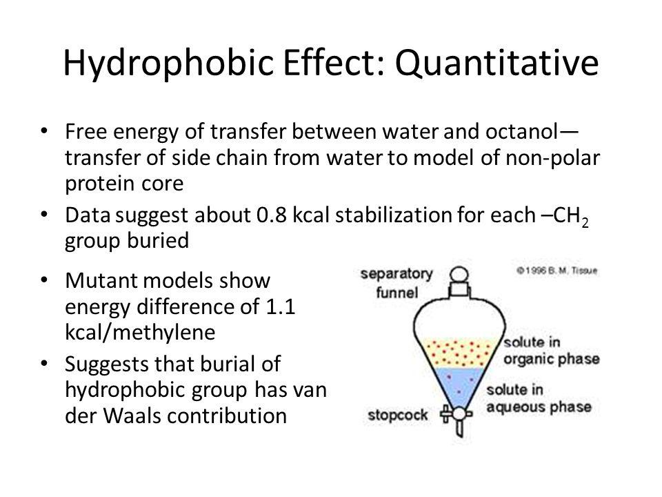 Hydrophobic Effect: Quantitative