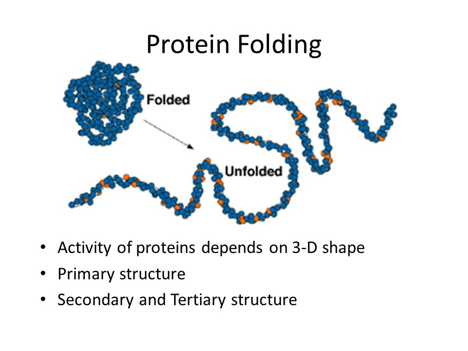 Protein Folding Activity of proteins depends on 3-D shape
