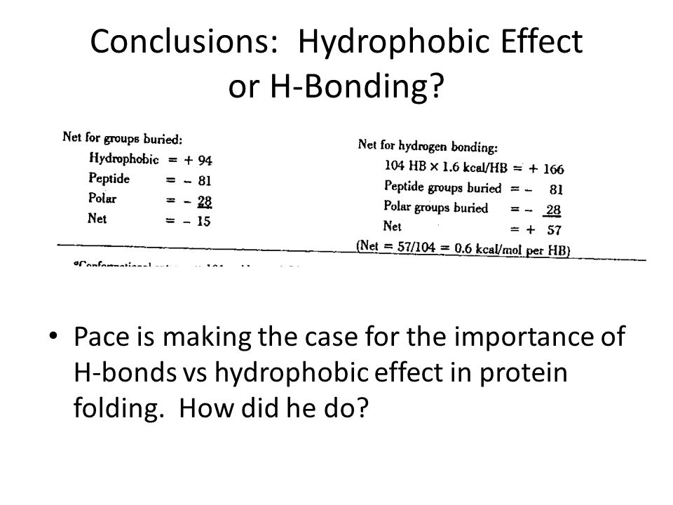 Conclusions: Hydrophobic Effect or H-Bonding