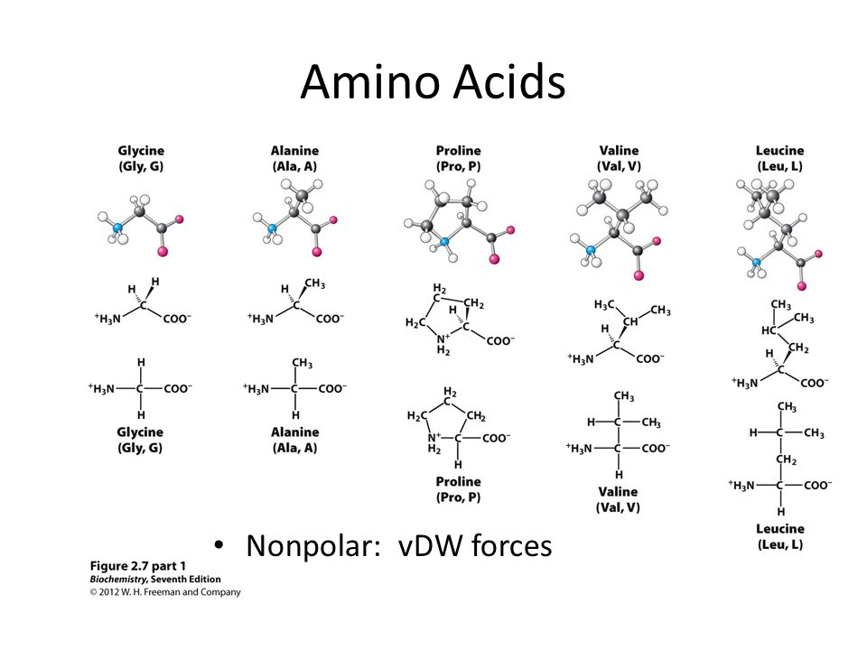Amino Acids Nonpolar: vDW forces