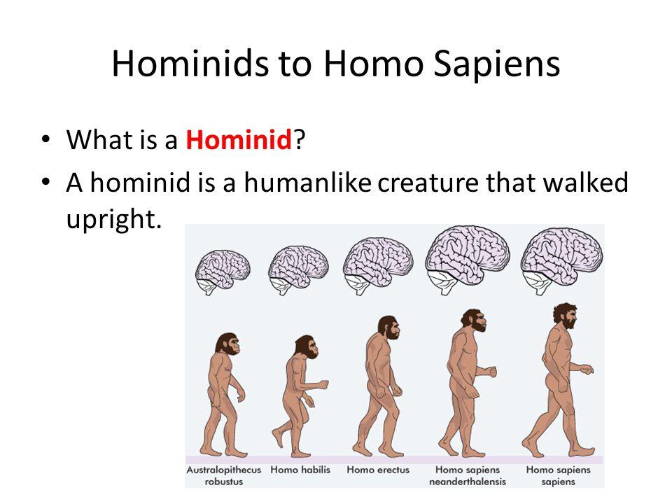 Hominids to Homo Sapiens