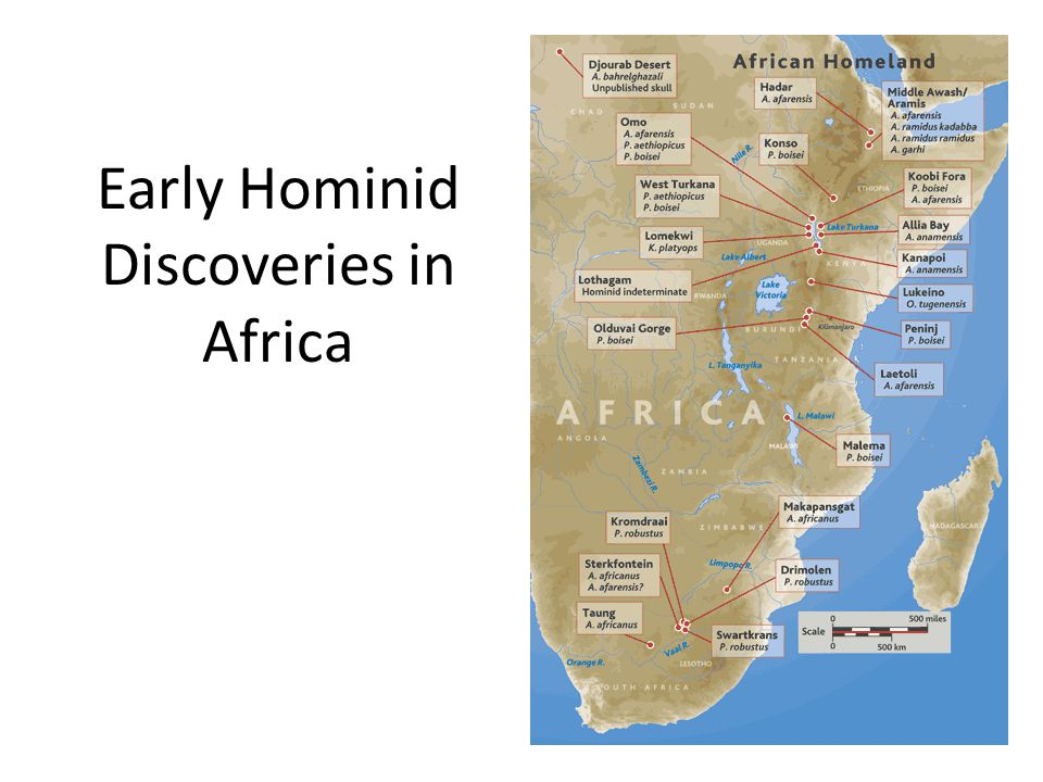 Early Hominid Discoveries in Africa