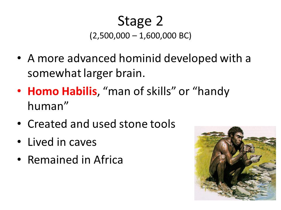 Stage 2 (2,500,000 – 1,600,000 BC) A more advanced hominid developed with a somewhat larger brain. Homo Habilis, man of skills or handy human