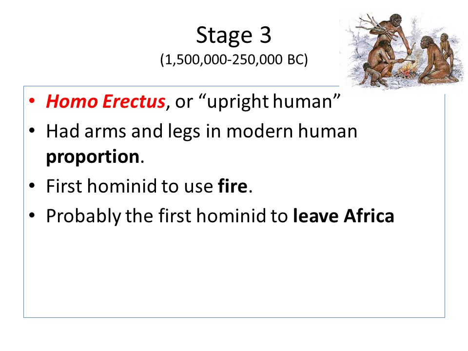 Stage 3 (1,500,000-250,000 BC) Homo Erectus, or upright human