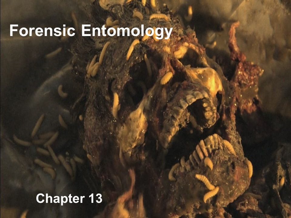 Forensic Entomology Chapter 13