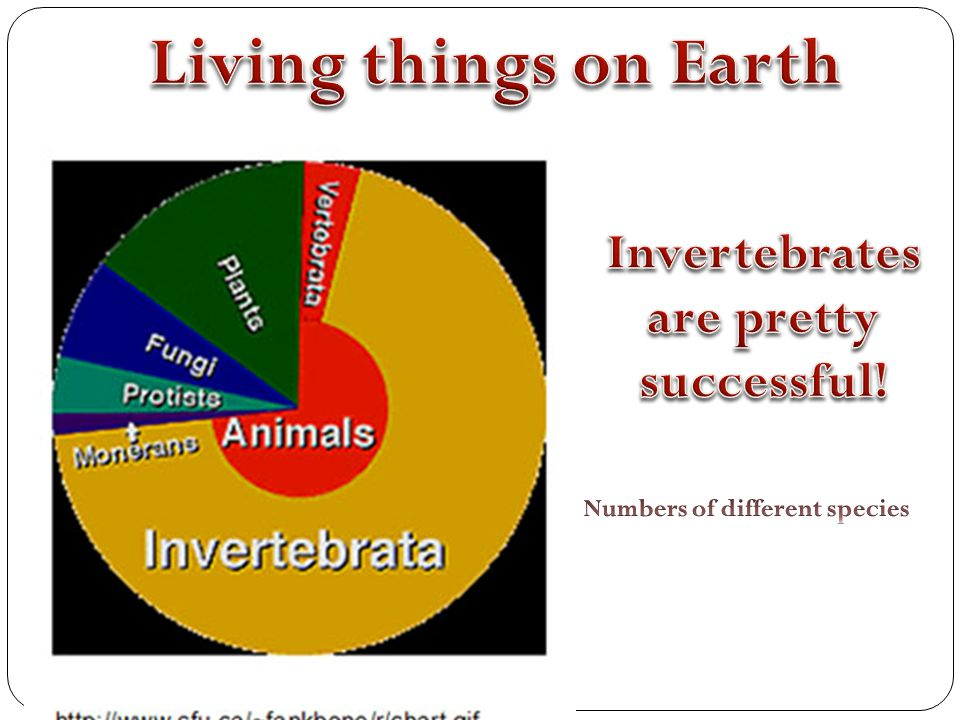 Invertebrates are pretty successful! Numbers of different species