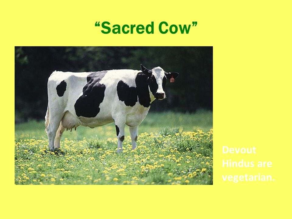 Sacred Cow Devout Hindus are vegetarian.