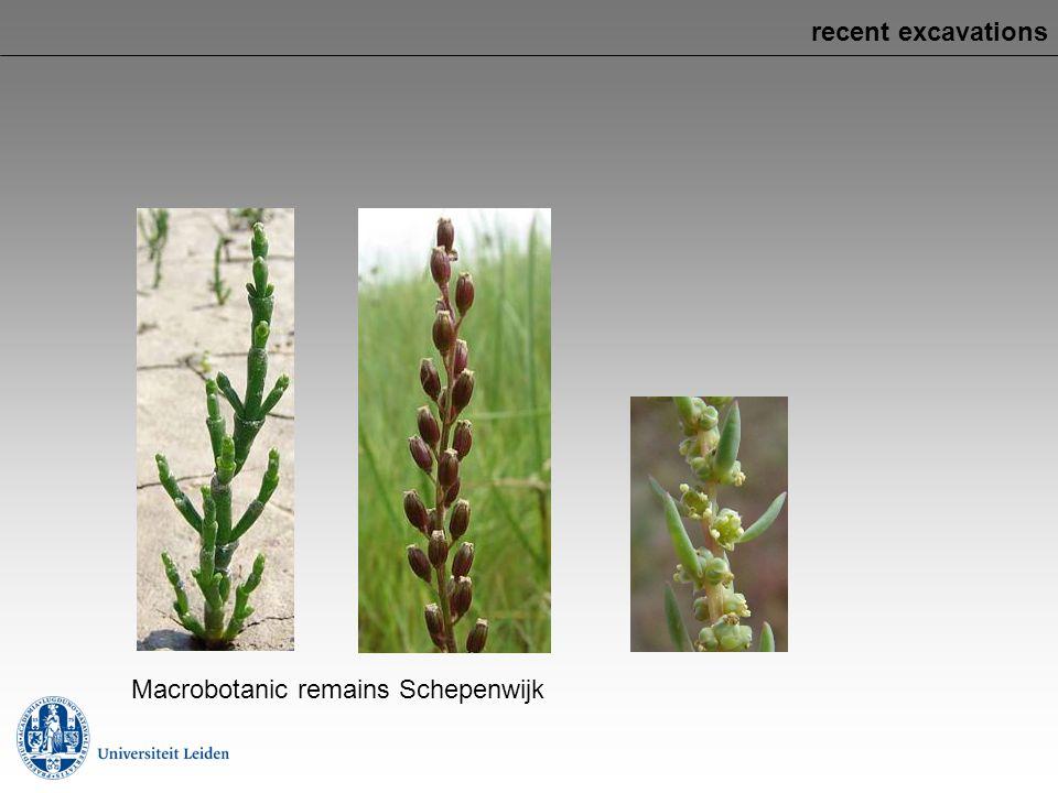 recent excavations Macrobotanic remains Schepenwijk