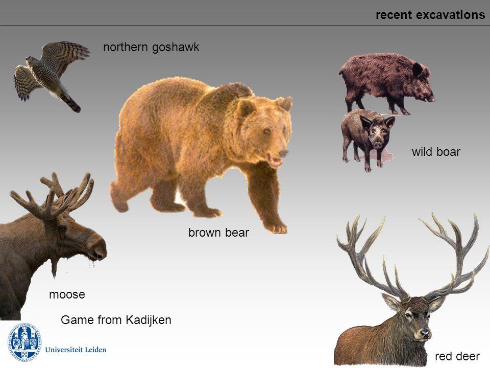 recent excavations northern goshawk wild boar brown bear moose Game from Kadijken red deer