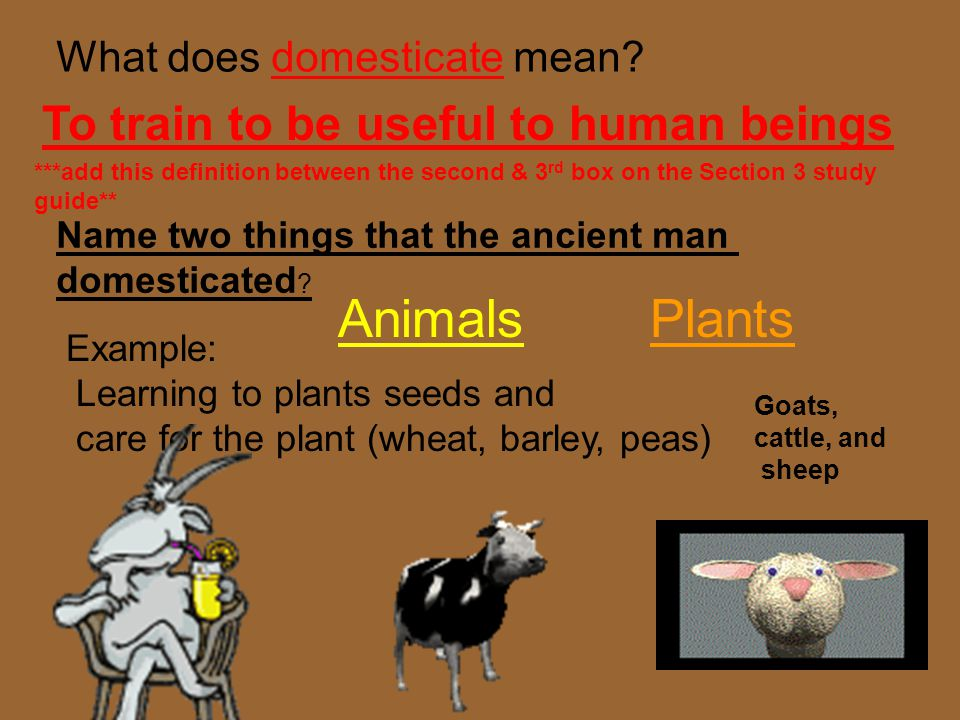 Animals Plants To train to be useful to human beings